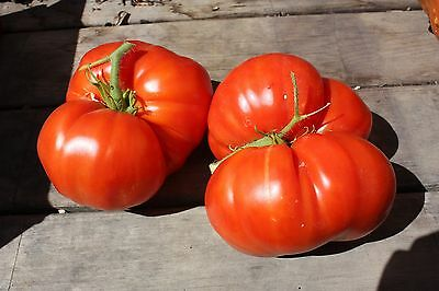 Non-gmo Seed   FREE Shipping Tomato MORTGAGE LIFTER 25 Heirloom
