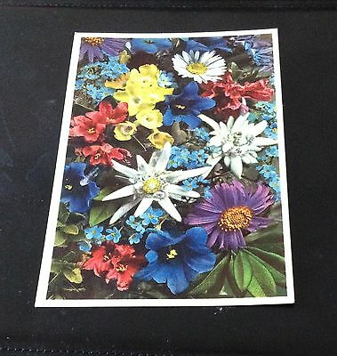 Postcard Vintage Alpine Flowers Not Used