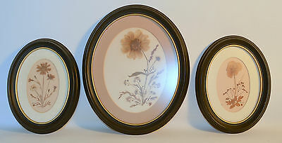 Set 3 Oval Wood Black Frame with Glass Dry Flowers Assembly Dahlia, Pansy, Daisy
