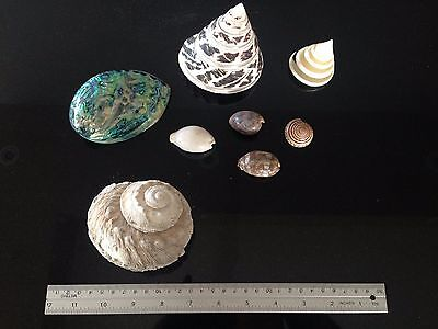 Collection of colourful smaller shells