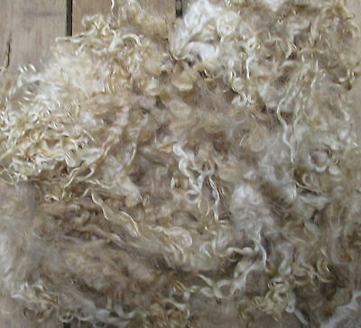 Teeswater Loose Fleece Raw (Unwashed)  for Spinning and Crafts 200g
