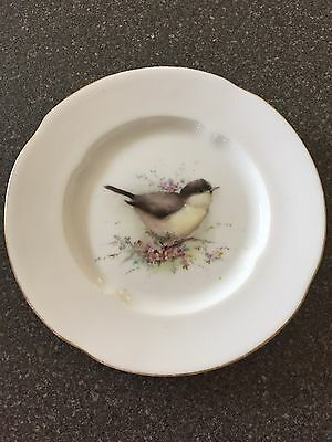 Royal Worcester Small Plate Picture Of A Black Cap