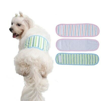 DOG BELLY BAND boy male toilet training puppy tiny teacup 24cm SMALL BLUE STRIPY
