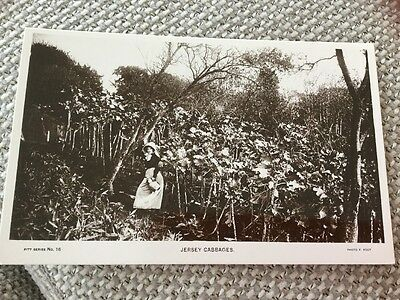 Real Photo Postcard Jersey Cabbage Crop Lady With Billycan