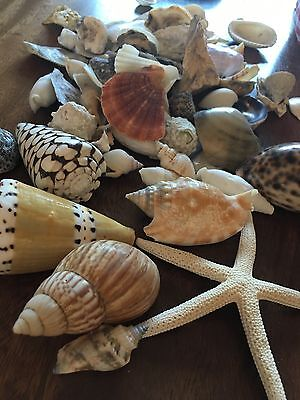 Large shell collection of rare shells and a starfish