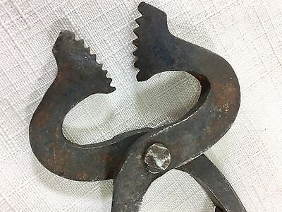 Antique Sugar Nips Nippers Serrated Tooth Edge Iron Hand Forged 6 3/4""