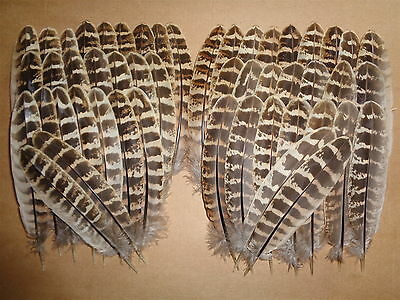 """50 Hen Pheasant Wing Feathers 5"""" - 6"""" - 1st class postage - Fly Tying Millinery"""
