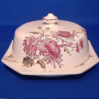 Antique & Rare c1885 GEORGE JONES CHRYSANTHEMUM - CHEESE DOME / CLOCHE - VGC