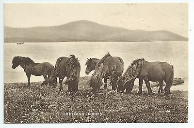 Printed postcard of shetland ponies on  Shetland,Scotland in very good condition
