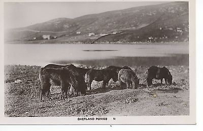 Real photo postcard of Shetland ponies on the Shetlands ,Scotland  Ramsay photo
