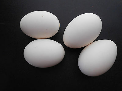 Four (4) Blown and Sealed Goose Eggs