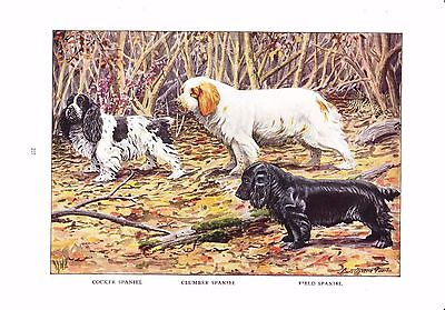 1919 Vintage Dog Print ~ Cocker Clumber & Field Spaniels ~a/s Louis Fuertes