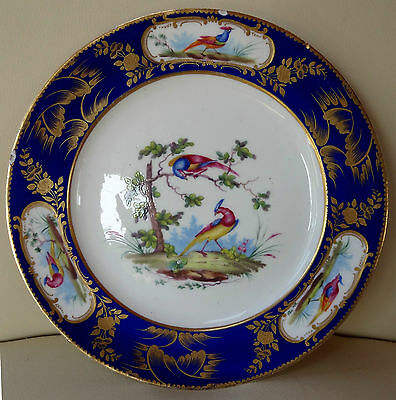 Beautiful Sevres Porcelain Hand Painted Plate with Exotic Birds