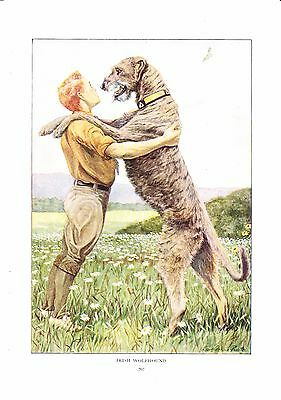 1919 Vintage Dog Print ~ Irish Wolfhound Painting ~ a/s Louis Fuertes