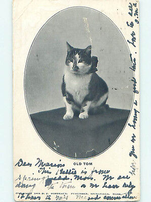 1904 Old Tom - NICE CAT WITH A SPOT ON HIS NOSE HJ4737