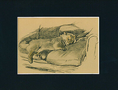 Dog Print 1934 Chow Chow by CECIL ALDIN Lounges on Sofa VINTAGE