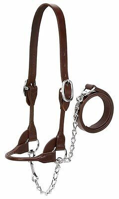 Weaver Leather Dairy/Beef Rounded Show Halter, Brown, X-Small