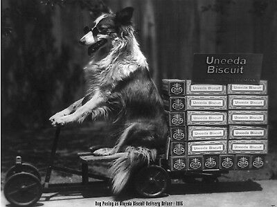 1916 Uneeda National Company Biscuit Collie Nabisco New Large Photo Print 1277