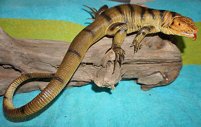 Tegus Lizard Replica - Brown - Realistic PVC