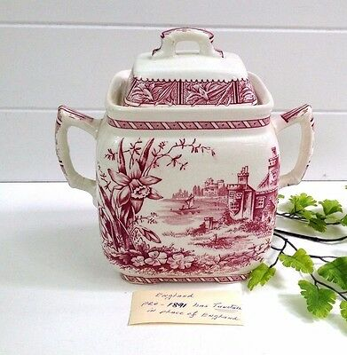 1800's WH Grindley Daffodil Pink Transferware Ironstone Tea Caddy  Tunstall RARE