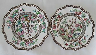 COALPORT INDIAN TREE Vintage  Scalloped rim LOT 8 Salad Plates
