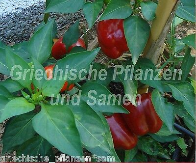 ️ MINIATURE ROUGE Ungarische Mini Paprika CHILI PIMENT DOUX 10 graines