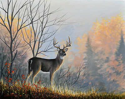 Original Art - Whitetail Deer Wildlife Canvas Painting - Signed by Chuck Black
