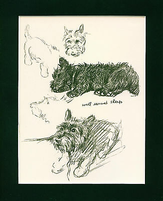 Dog Print 1940 Scottish Terrier plays and sleeps by Lucy Dawson VINTAGE