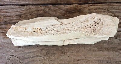 """Petrified Wood (Not Real Hard) 7"""" By 2-1/4"""" By 2"""""""