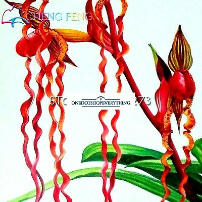 10Pcs Rare Water butterfly orchid seeds colourful spots Genuine Viable UK Stock
