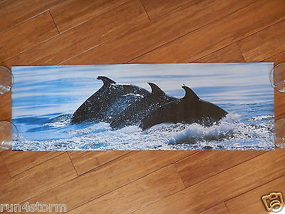 """LOVE, PEACE, & UNDERSTANDING Dolphins SCANDECOR 11 ¾"""" x 36"""" Panorama Poster"""