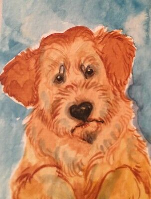 ACEO Labradoodle Dog.A Watercolor Original Art By NFISH