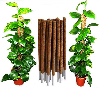 COCO POLE COCONUT COIR FIBRE PLANT SUPPORT STAKE 1m, 1.2m PACK OF 2