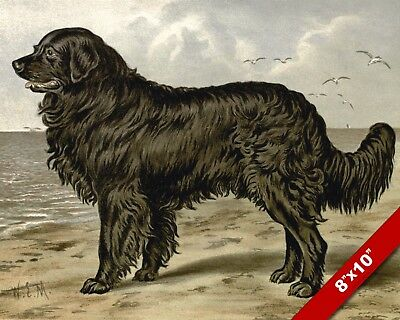 The Gentle Newfoundland Pet Puppy Dog Animal Art Painting Print On Real Canvas