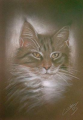 Cat Katze 13 Pastell and others hand drawn