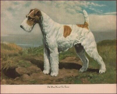 GORGEOUS WIRE-HAIRED FOX TERRIER  DOG ART 1946  PRINT VINTAGE Megargee Edwin