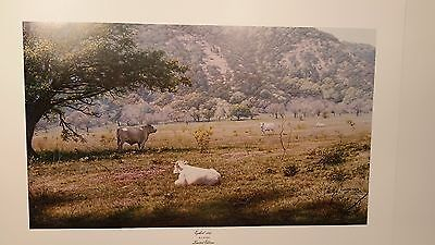 LARRY DYKE, White Cows Lying in Hill Country Pasture, Ezekiel 34:15