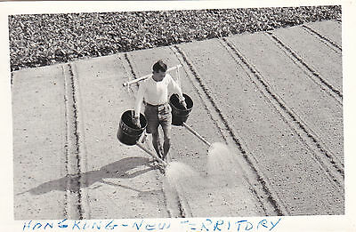 RP, Man Working On The Field, New Territory, Hong Kong, China, 1930-1940s