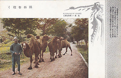 Peking , China , 1910-20s ; Man with Camels