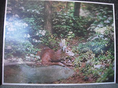 Vintage Lentograph Picture Victor Anderson 3d Studios Deer in Woods Plate No 121