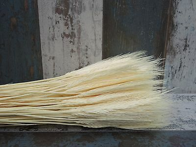 300 Stems Dried Wheat Barley Wedding Decoration Flowers Arrangement Bleached 20""
