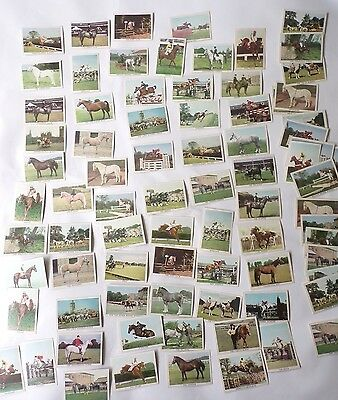 The Horse, a series of 66 Anglo Confectionary Limited cards Not A Complete Set