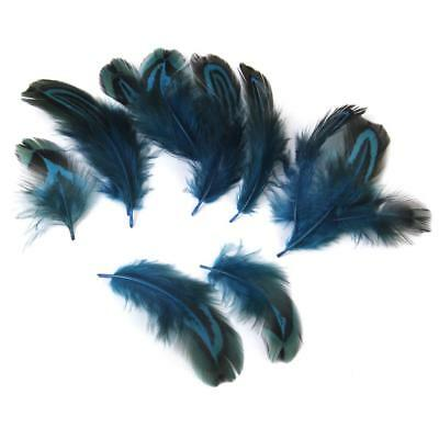 50x Dyed PHEASANT PLUMAGE FEATHERS For Craft Art Millinery Fly Tying