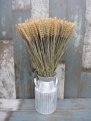 Dried Wheat Bunch 100/300 Stems Flower Arranging Rustic Wedding Harvest 18-20""