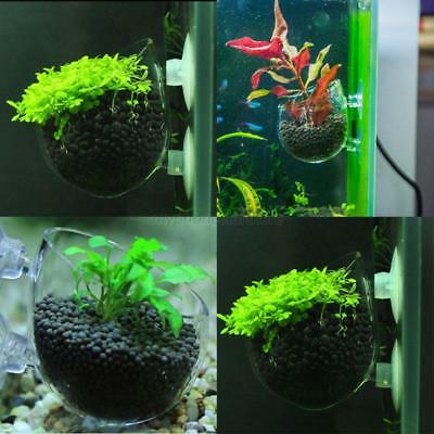 Mini Aquarium Fish Tank Plant Glass Cup Pot Red Shrimp Aquatic Crystal Holder