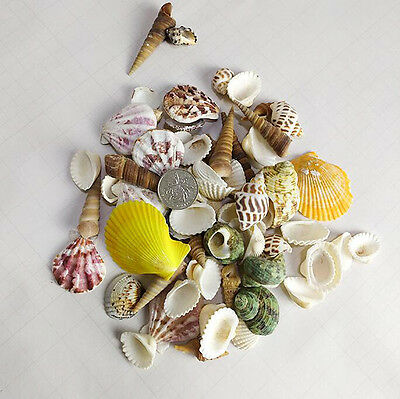 100g Mixed Sea Shells Natural Beach Seashells Aquarium Decor Craft DIY