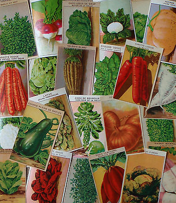 Original 1920's Lithograph Vegetable Prints French 1920's Seed Packet Labels