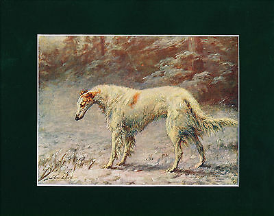 Dog Print 1907 Borzoi Dog by Maud Earl ANTIQUE
