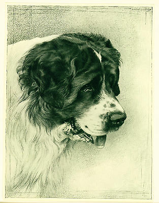 Dog Art Print 1935 Saint Bernard Dog VINTAGE