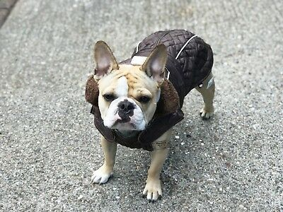 Pug French Bulldog or Bulldog Coat Unique design Brown Soft comfort lining